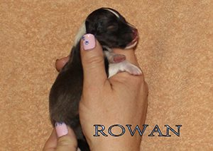 rowanday0side_6feb2016x300