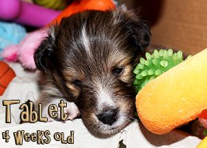 tabletsleepytoys4wks5mar2016x300